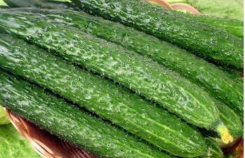 身材瘦长,有绿有黄,自从出世,遍体生疮(打一蔬菜)谜底及原因