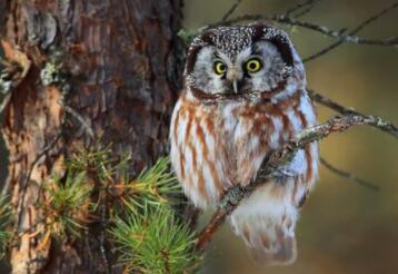 眼睛贼亮树上挂,灵活脖子就属它(打一动物)谜底及原因