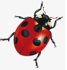 身体半球形,背上七颗星,棉花喜爱它,捕虫最著名(打一动物)谜底及原因