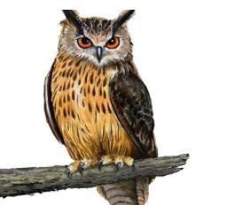 面孔像猫,起飞像鸟,天天上夜班,捉鼠本领高(打一动物)谜底及原因